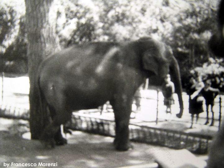 L'elefante Menelik nella foto di Francesco Marenzi
