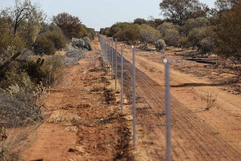 """La Rabbit-proof-fence, altrimenti detta """"recinzione del coniglietto"""""""